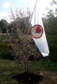 Акция Посади свое дерево в г. Долгопрудном.